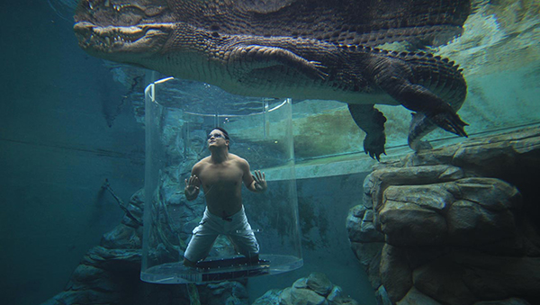 Crocosaurus Cove Pool